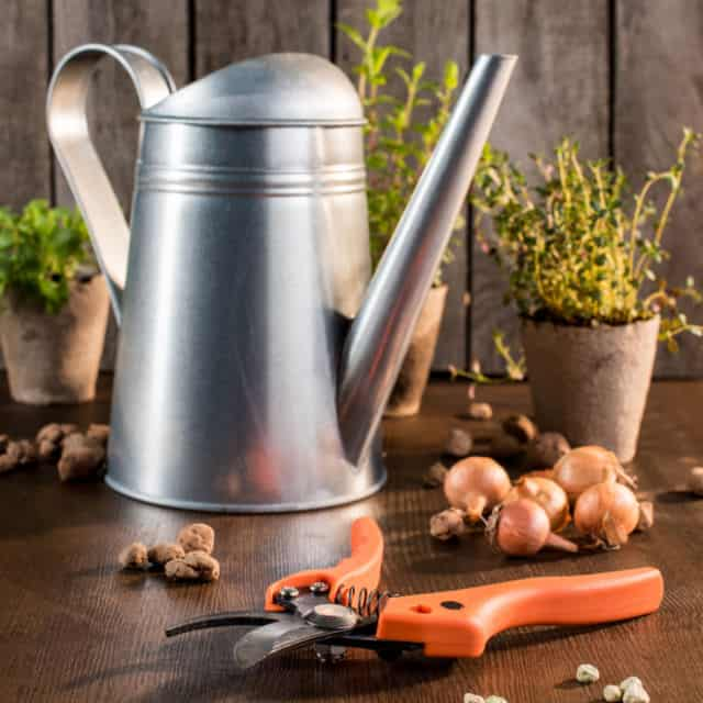 A watering can, gardening shears, plants in pots, and seeds scattered on a table.