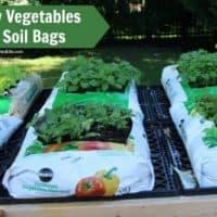 Grow Vegetables in Garden Soil Bags
