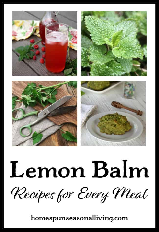 A collage of lemon balm recipe photos with text overlay.