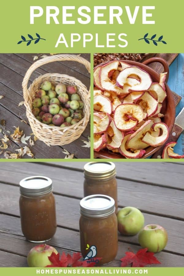 A collage of photos that include a basket of fresh apples, dried apple rings, and jars of maple apple butter with text overlay.