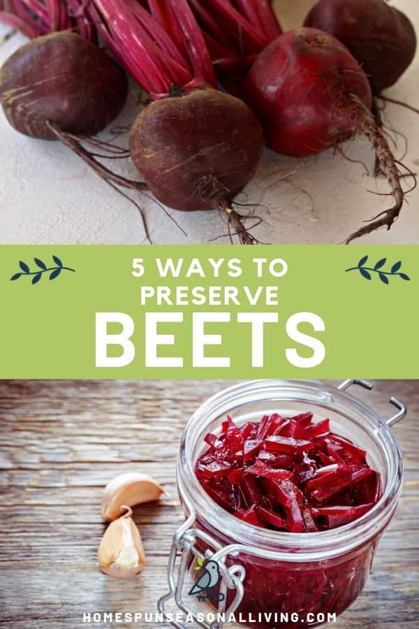 A collage of photos including one of fresh beets and another of pickled beets in a jar with text overlay.