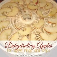 Dehydrating Apples to Make Dried Apple Rings and Apple Chips