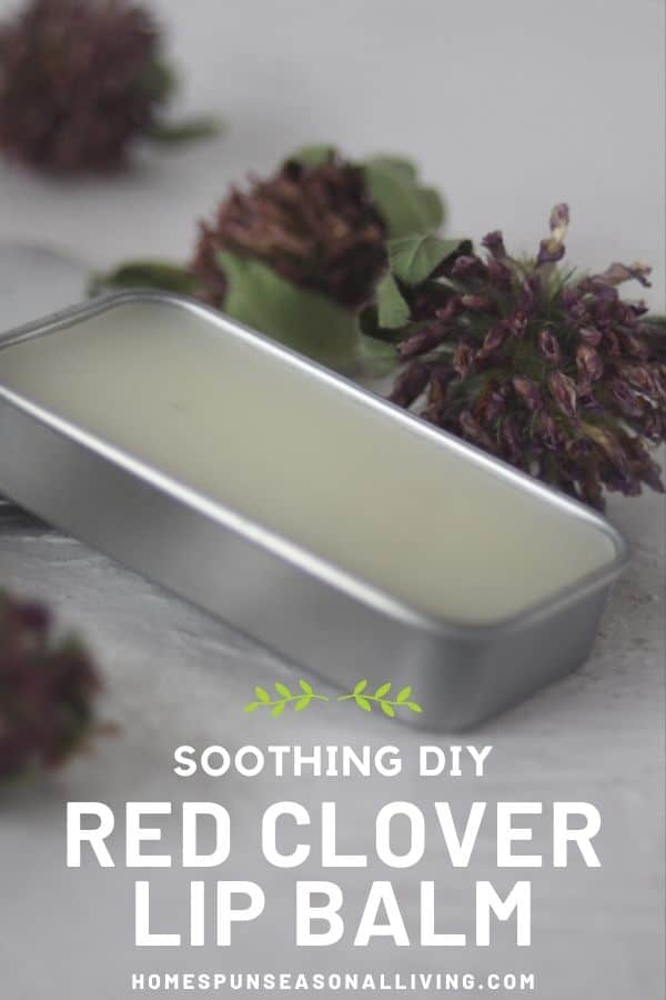 A tin of red clover lip balm sitting on a table surrounded by dried red clover blossoms.