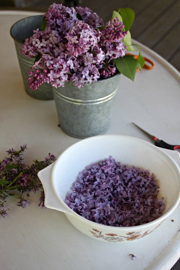 A metal bucket filled with lilac branches sitting behind a white bowl of lilac blossoms snipped from their stems.