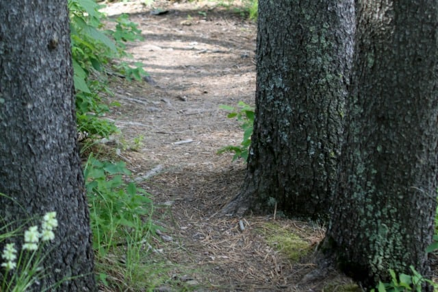 A dirt path winding through tree trunks in the woods.