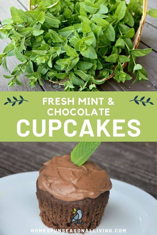 A collage of stacked photos with a basket of freshly harvested mint on top, text overlay in the middle, and a chocolate mint cupcake on the bottom.