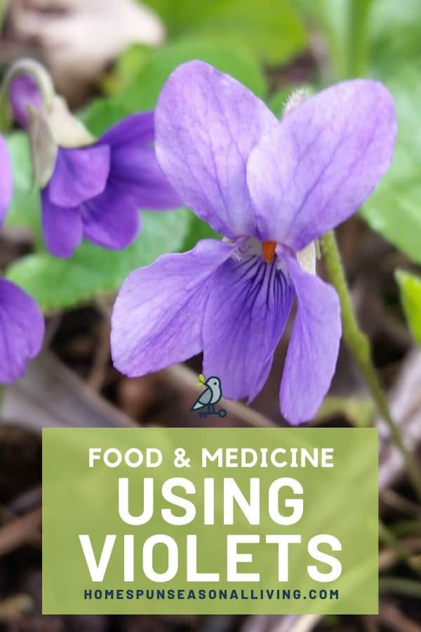 close up of wild violet with text overlay.