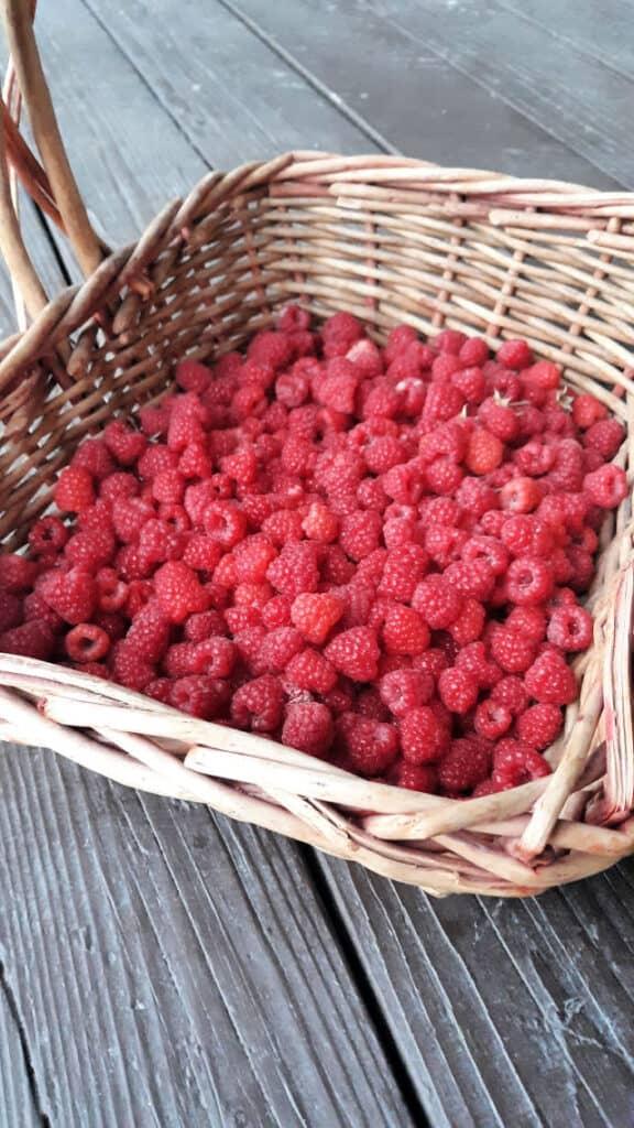 Red raspberries in a basket.