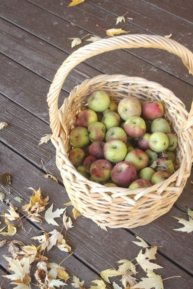 A wicker basket full of fresh apples sitting on a deck surrounded by fall leaves.