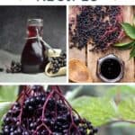 Text overlay stating elderberry recipes above a collage of photos containing an open bottle of elderberry tincture, an open jar of elderberry jelly, and fresh elderberries hanging on a stem.