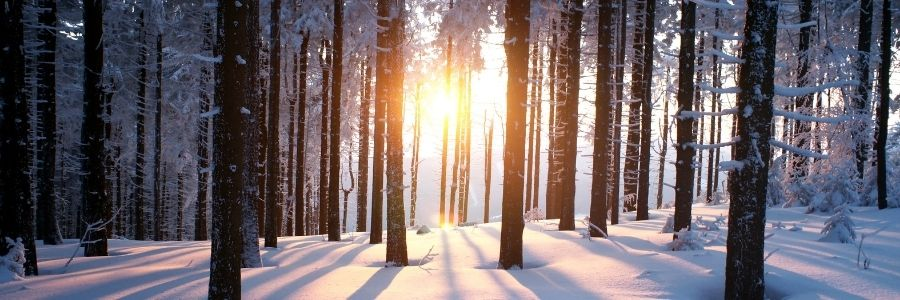 Sun through trees in a snowy forest.