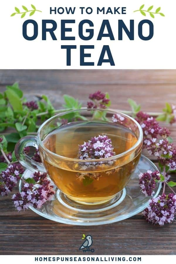 A clear glass tea cup and saucer full of herbal tea and surrounded by fresh oregano flowers with text overlay reading: how to make oregano tea.