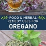 A clear glass cup and saucer full of herbal tea surrounded by fresh oregano flowers stacked on top of a text box reading food & herbal remedy uses for oregano stacked on a top of an image of an open jar of pesto surrounded by fresh herb leaves.