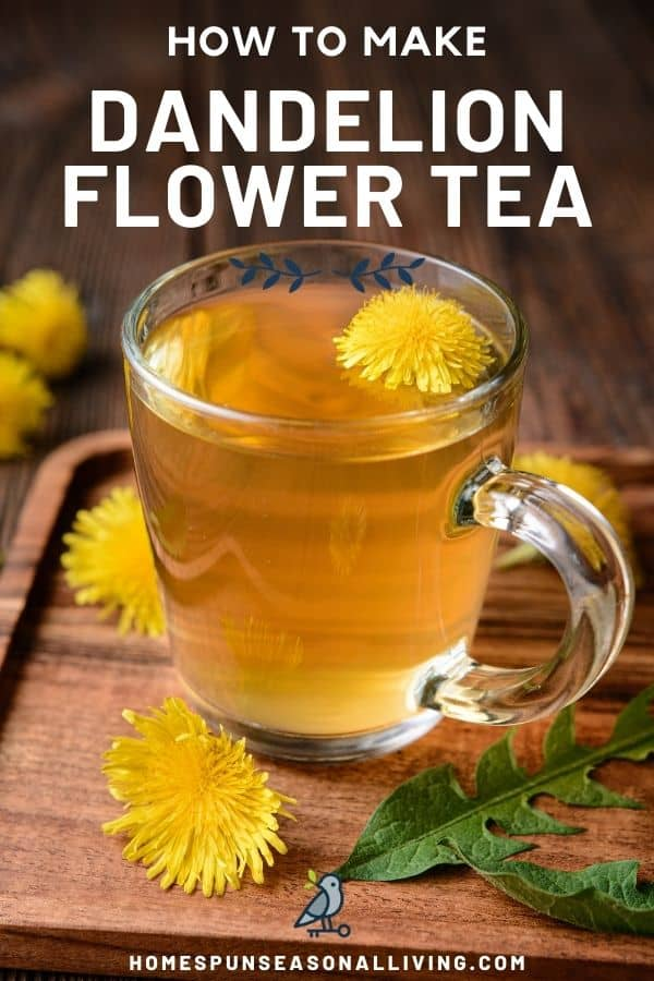A clear glass mug full of tea with a dandelion blossom floating inside. The mug is sitting on a board surrounded by dandelion flowers and leaves with text overlay stating: how to make dandelion flower tea.