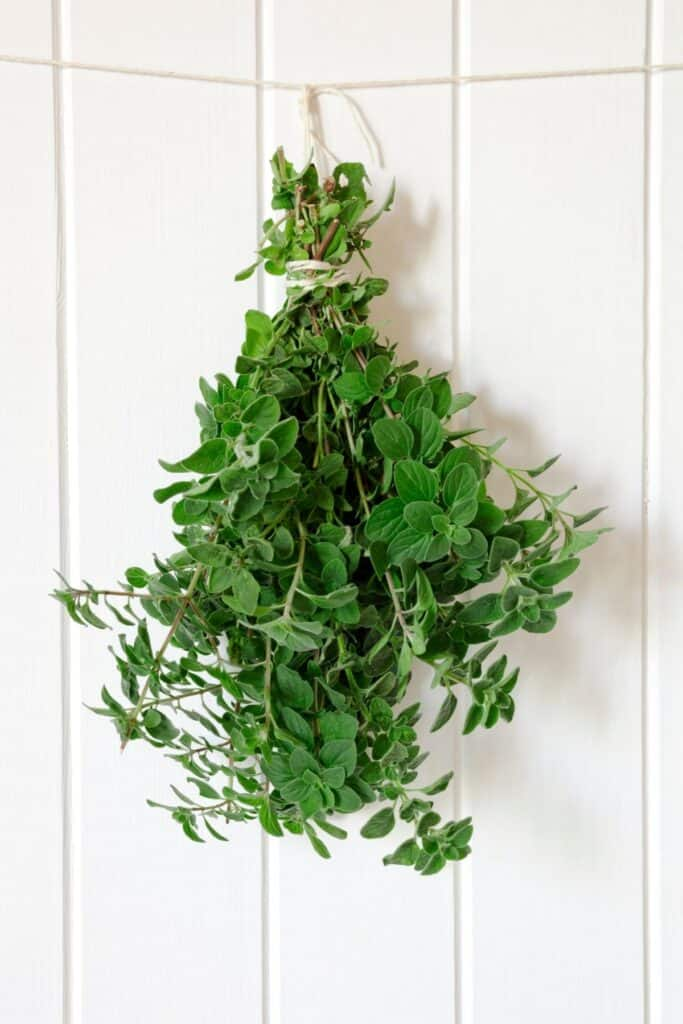 A bunch of fresh oregano stems tied together and hanging from a rope against a white wall.