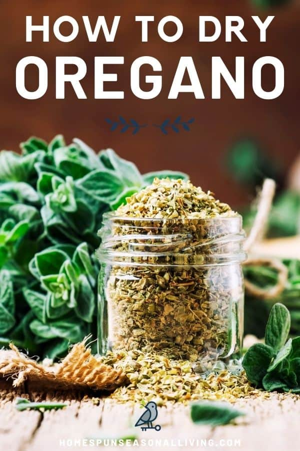 An overflowing jar of dried oregano sitting on a piece of burlap with fresh oregano in the background with text overlay stating how to dry oregano.
