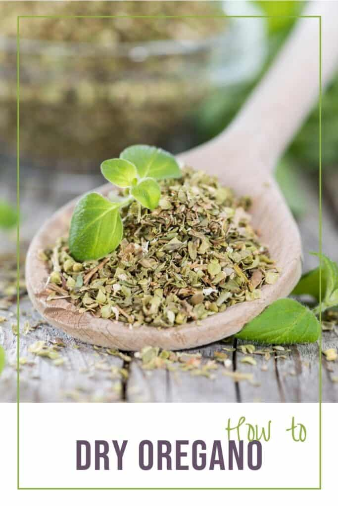 A wooden spoon full of dried herbs with fresh oregano sitting on top with text overlay reading: how to dry oregano.