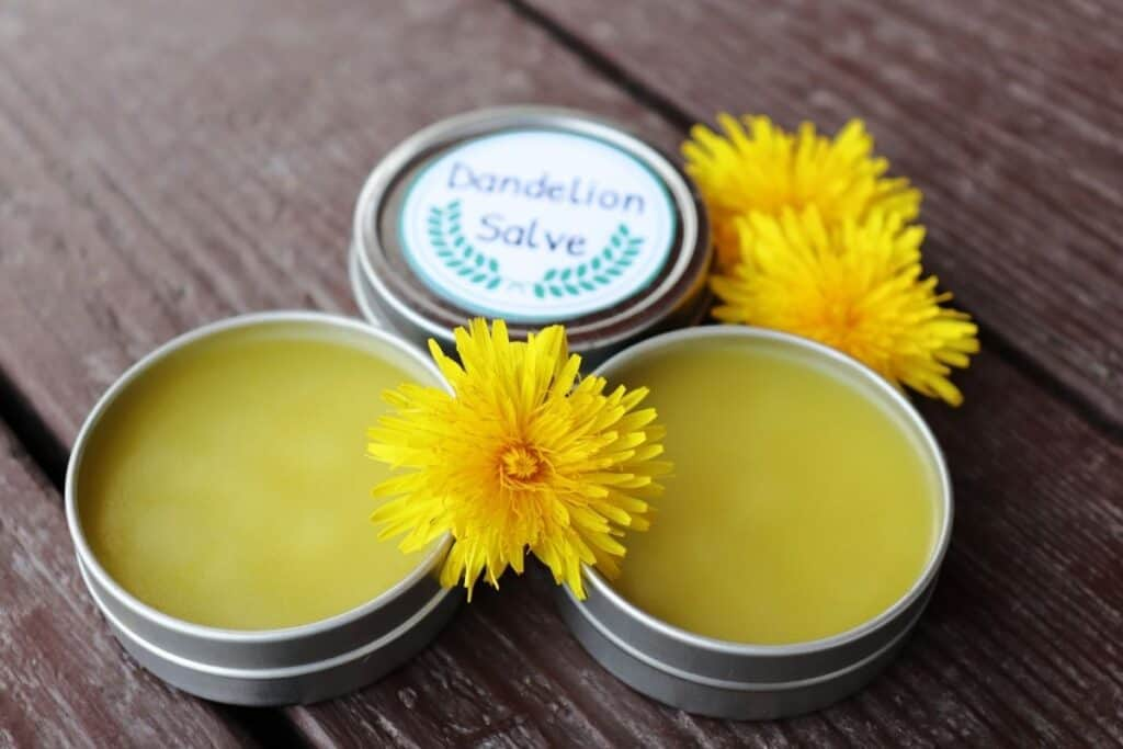 2 metal tins without lids exposing salve inside surrounded by fresh dandelion flowers and a third tin behind with a white label on the lid stating: dandelion salve.