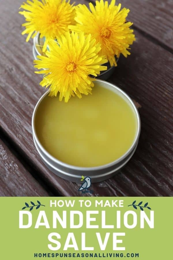 A round metal tin without a lid exposing yellow salve inside with dandelion flowers sitting behind it and a text overlay stating: how to make dandelion salve.