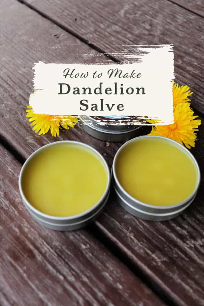 An open metal tin of salve sitting on table with fresh dandelion blossoms with text overlay reading how to make dandelion salve..
