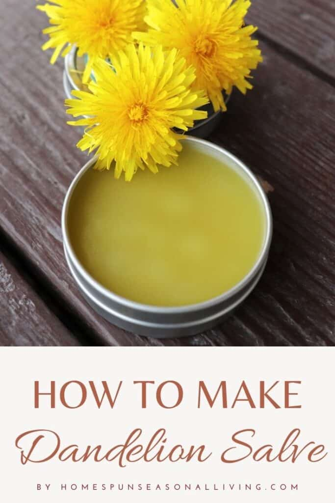An open metal tin of salve sitting on table with fresh dandelion blossoms with large text block at bottom reading how to make dandelion salve.