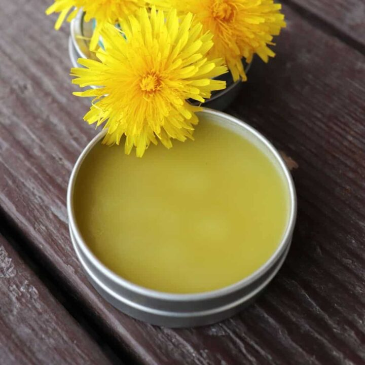 An open metal tin of salve sitting on table with fresh dandelion blossoms.