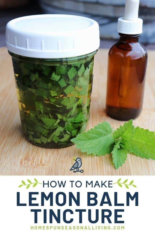 A canning jar full of chopped leaves submerged in liquid sitting next to a brown dropper bottle with fresh lemon balm leaves on the table with text overlay reading: how to make lemon balm tincture.