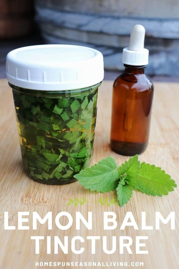 A canning jar full of chopped leaves submerged in liquid sitting next to a brown dropper bottle with fresh lemon balm leaves on the table with text overlay reading lemon balm tincture.
