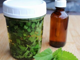 A canning jar full of chopped leaves submerged in liquid sitting next to a brown dropper bottle with fresh lemon balm leaves on the table.