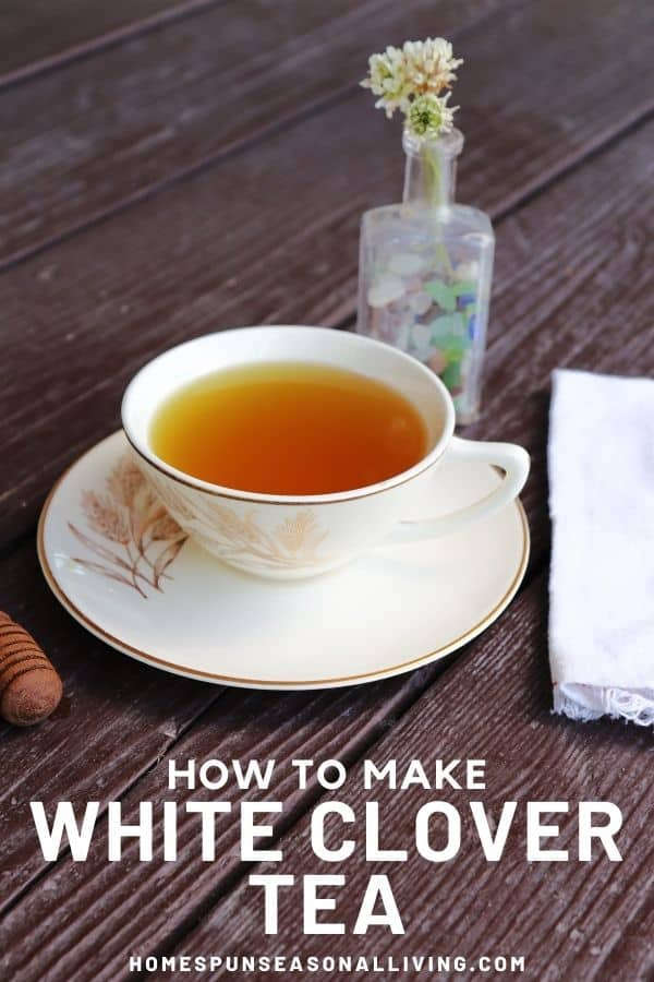 A teacup full of tea sitting on a saucer, a honey dipper to the left, a white napkin to the white, a small bottle of white clover flowers in the background. A text overlay states how to make white clover tea.