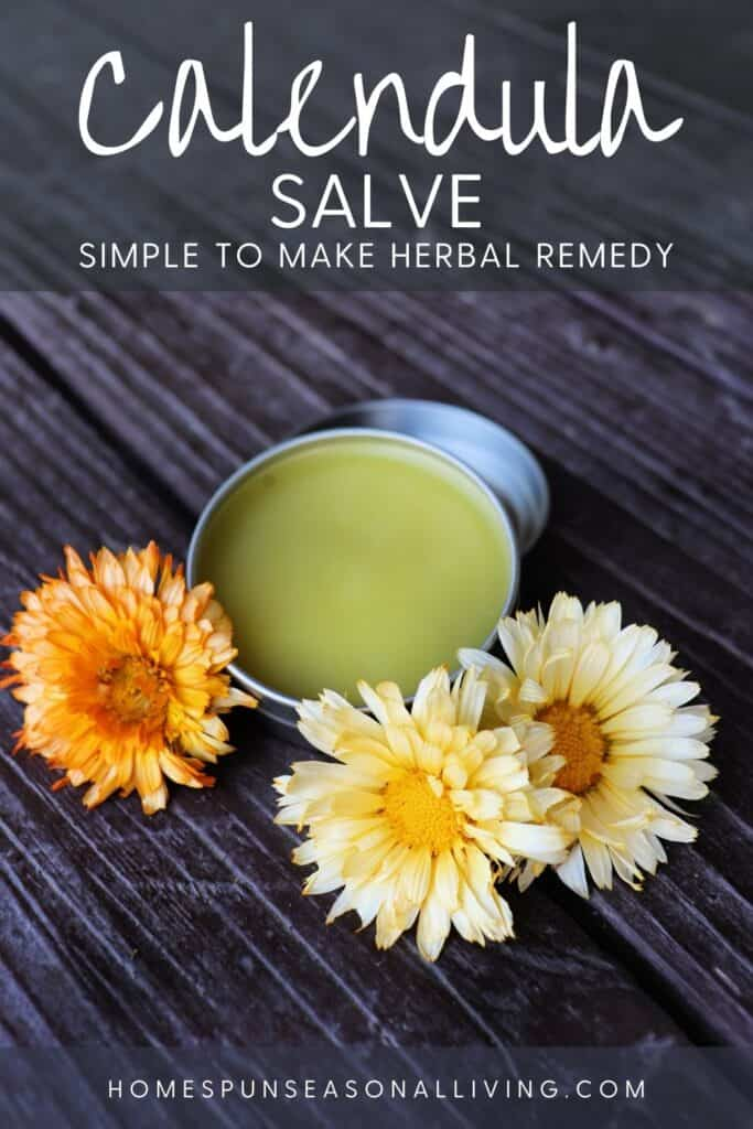 An open tin of calendula salve surrounded by fresh orange and yellow calendula flowers with text overlay stating: calendula salve: easy to make herbal remedy.