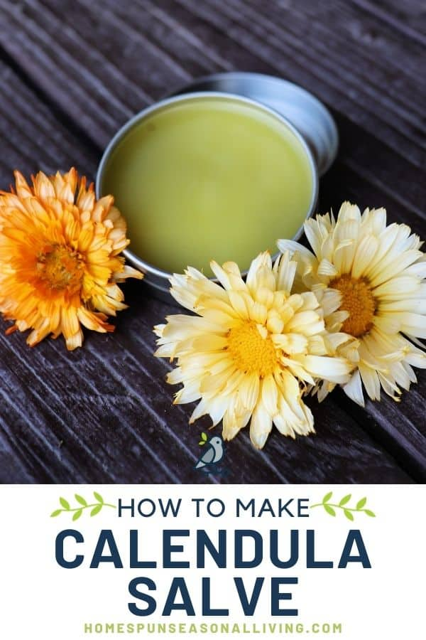 An open tin of calendula salve surrounded by fresh orange and yellow calendula flowers with text overlay stating how to make calendula salve.